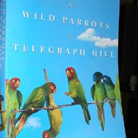 Wild Parrots of Telepgraph Hill