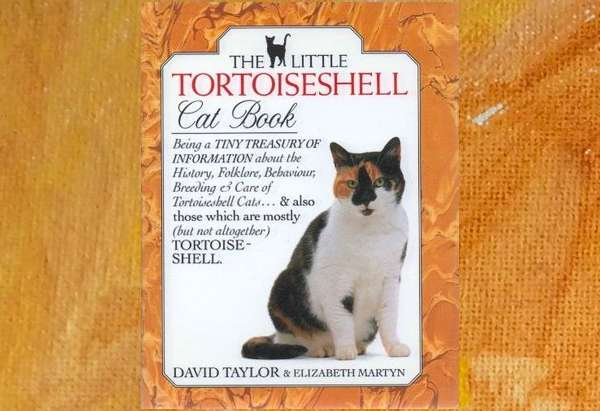 Little Tortoiseshell Cat Book