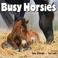 Busy Horsies