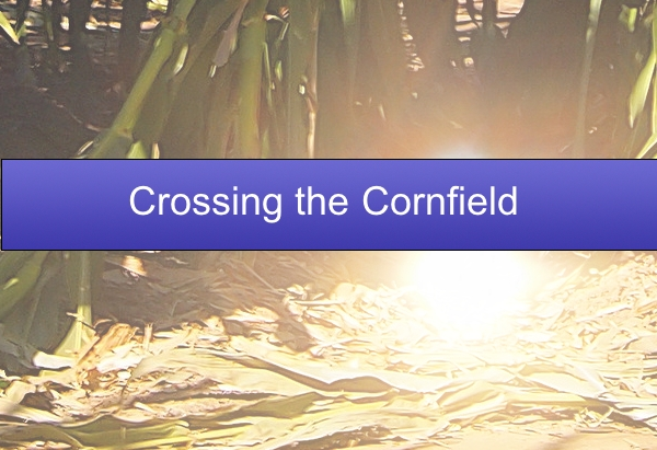 Crossing the Cornfield