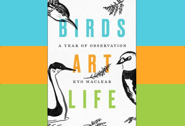 Birds Art Life: A Year of Observation by Kyo Maclear