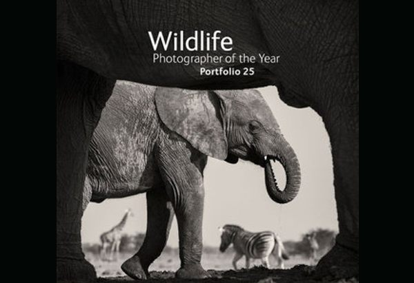 Wildlife Photographer of the Year: Portfolio 25 by Rosamund Kidman Cox
