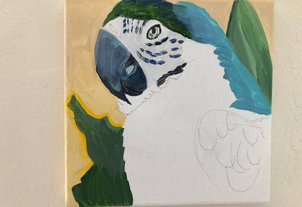 Macaw painted started, in acrlyics
